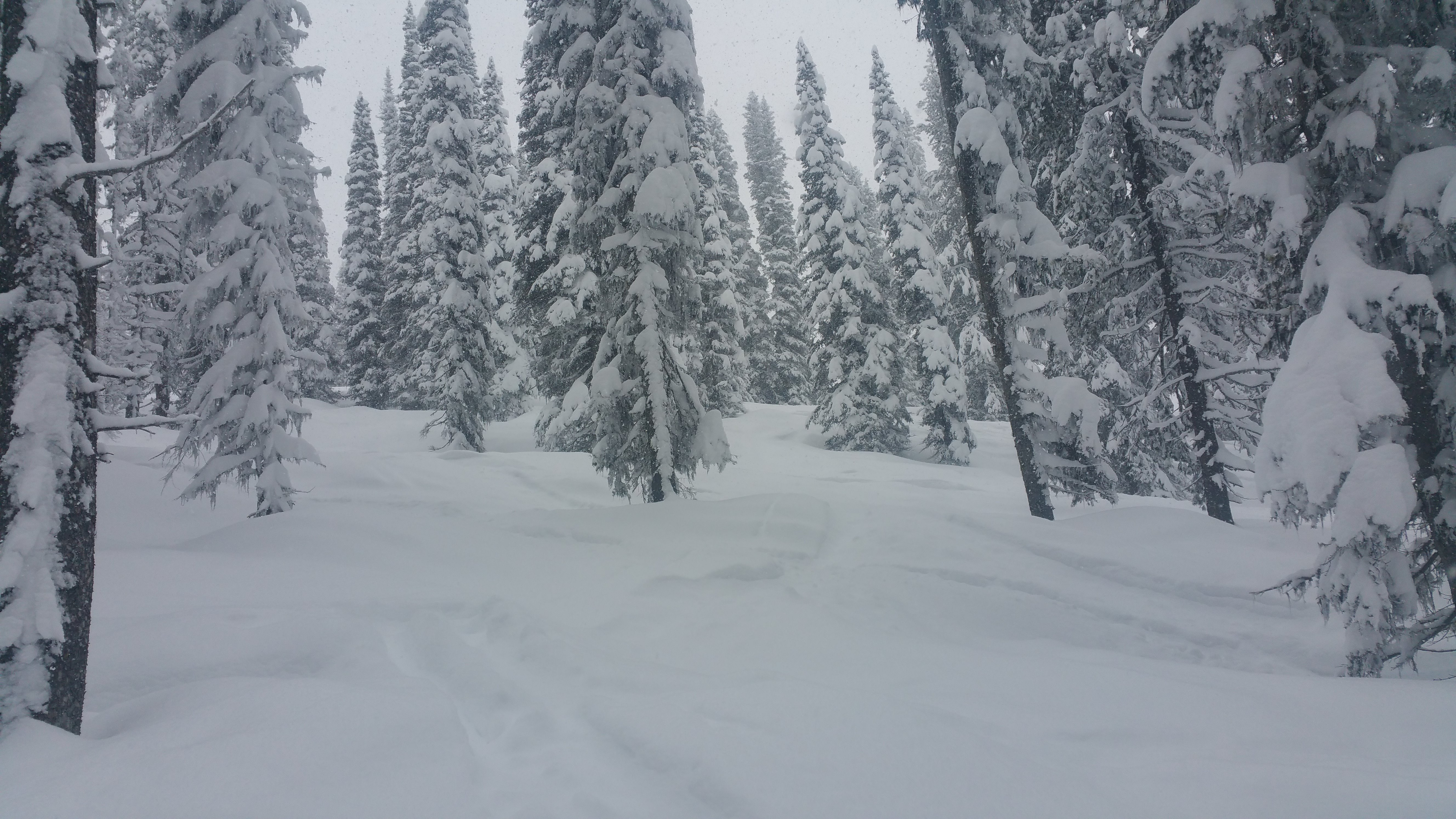 steep-deep-tree-skiing
