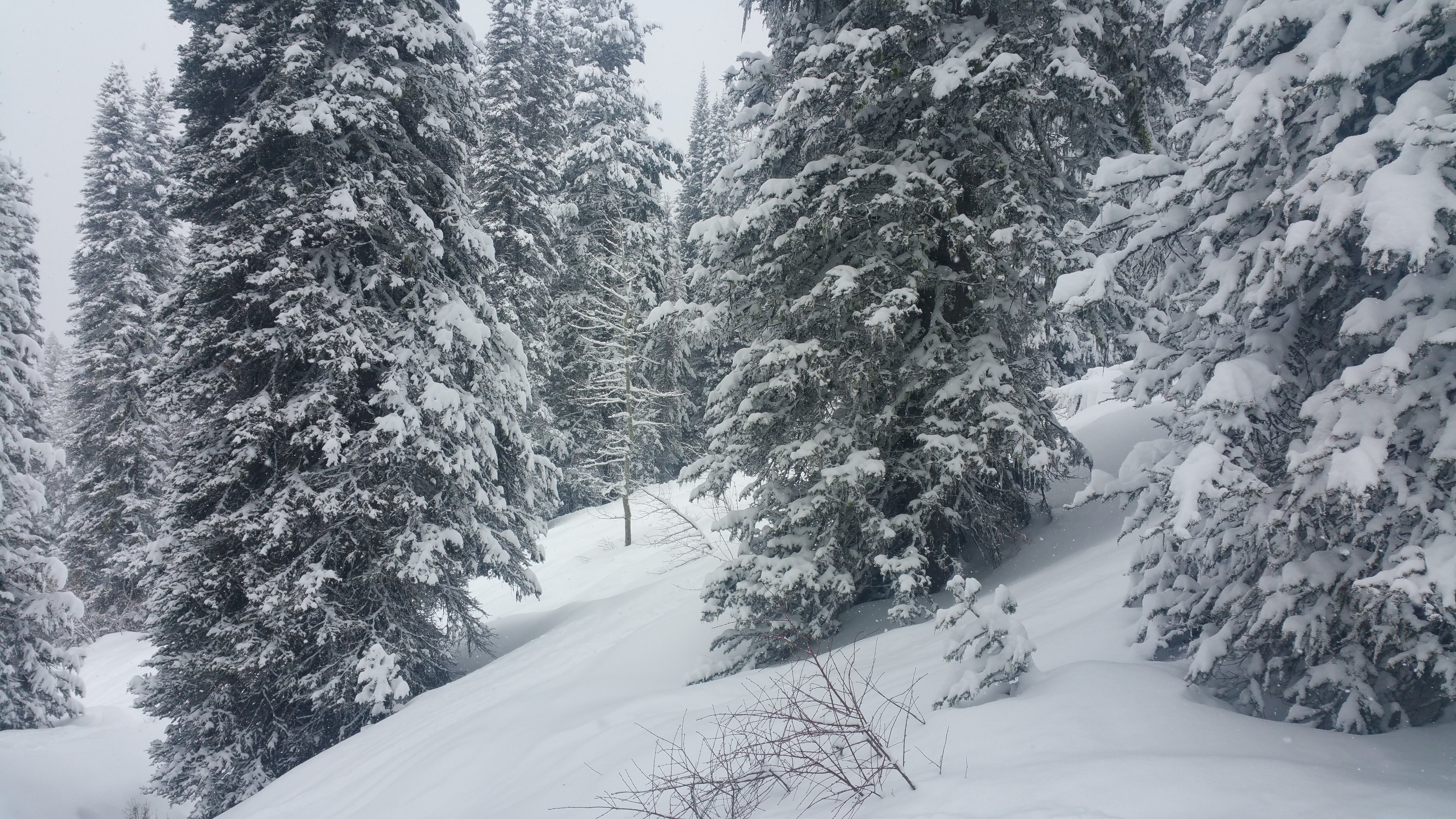 tree-skiing-March-16-2016